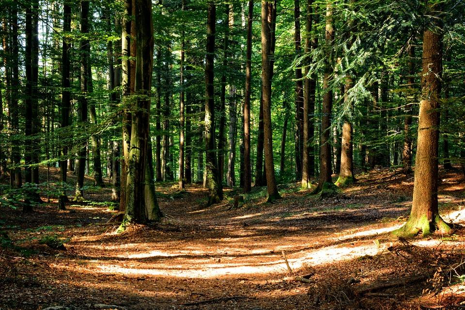paisaje de madera natural
